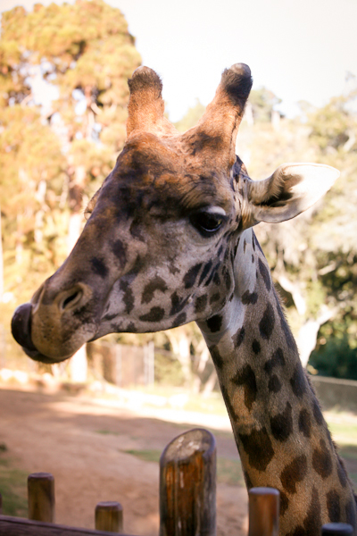 santa-barbara-zoo-wedding-1042